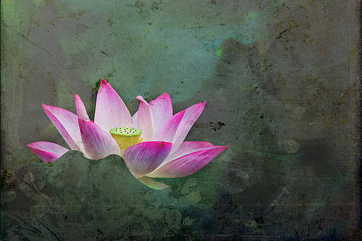 Mystical Lotus by Jason KS Leung