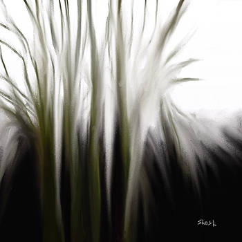 Shesh Tantry - Mystical Morning