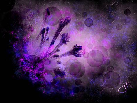 Mystical Nature by Jason Hanson