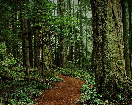 Randy Hall - Mystical Path