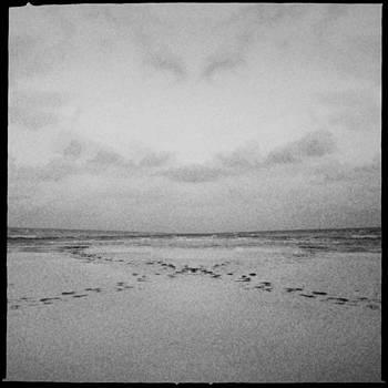 Mystical Siesta III by Alison Maddex