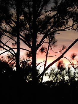 Florida Sunset 022 by Nola Hintzel