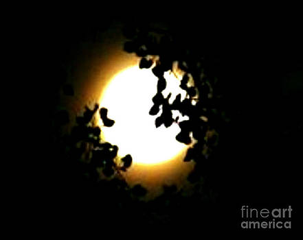 Mystical Super Moon Silhouette by Gail Matthews