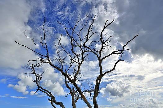 Naked Tree - Day by Mina Isaac