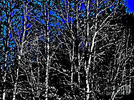 Naked Trees by Currie Silver