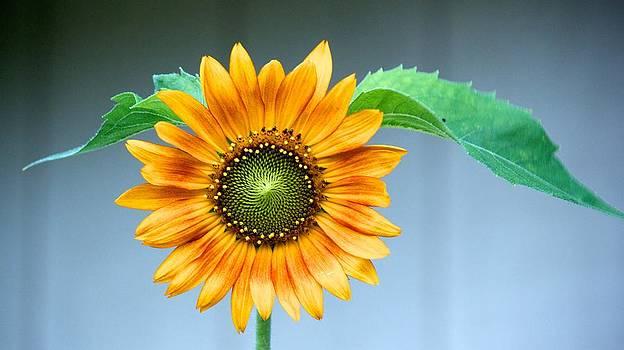 Nalani's Sunflower by Bonita Hensley