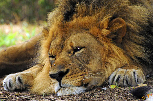 Nap Time by Jay Walshon MD