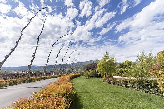 Napa spring landscape by Jianghui Zhang
