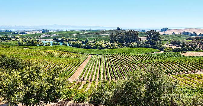 Jamie Pham - Napa Valley - Wine Vineyards in Napa Valley California.