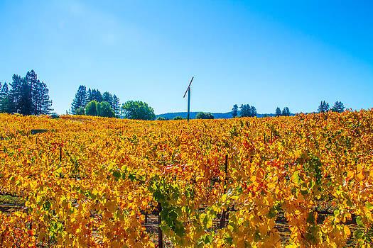 Napa wine Capital by Brian Williamson