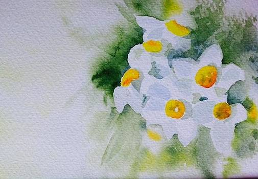 Narcissus by Ida Yavari