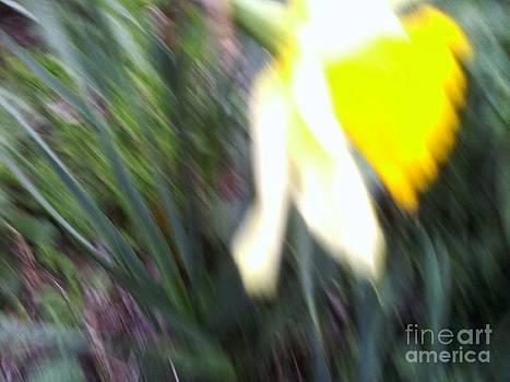 Narcissus by Victoria  Tekhtilova