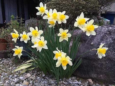 Narcissus by Yoshikazu Yamaguchi