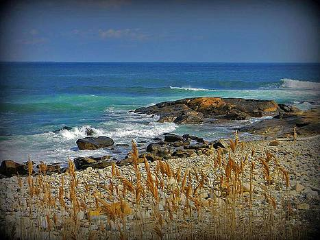 Narragansett Rocky Shore by Diane Valliere