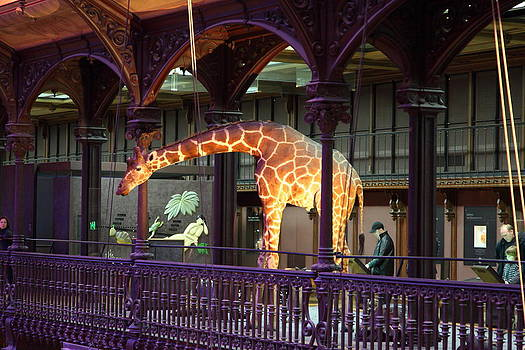 National Museum of Natural History - Paris France - 011351 by DC Photographer