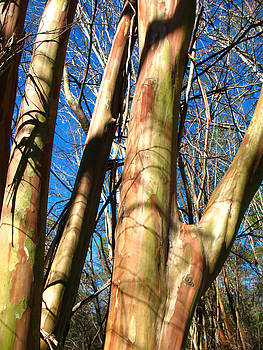 Connie Fox - Native Crepe Myrtles in Woodland Setting