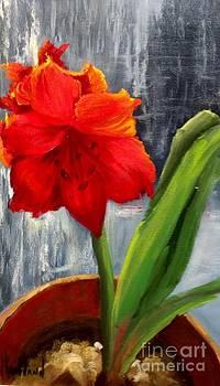 Nats Red Amaryllis by Barbara Haviland