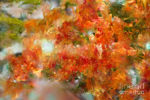 Natural Abstractions #12 The Orange Tree by Nola Lee Kelsey