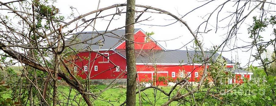 Natural Barn Frame by Jackie Bodnar