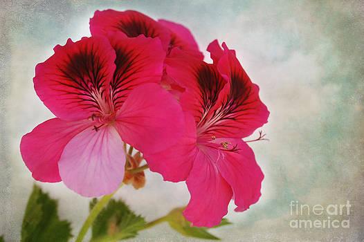 Natural Beauty by Claudia Ellis