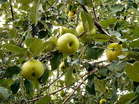 Yuriy Vekshinskiy - Natural fruits