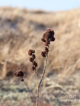 Michelle Wiarda-Constantine - Natural Gift