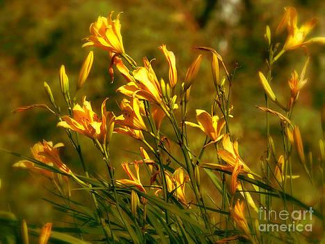 Natural Gold by Dori Sanz