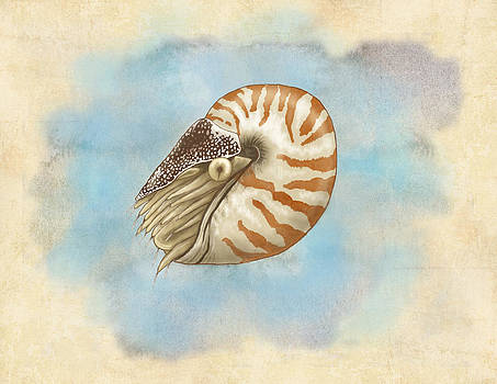 Natural History Nautilus by Sheryl Westleigh