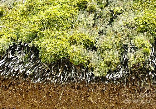 Natural Layers  by Carolyn Kami Loughlin