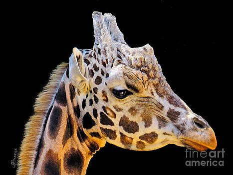 Natural Skyscrapper.Giraffe.NZ by Jennie Breeze