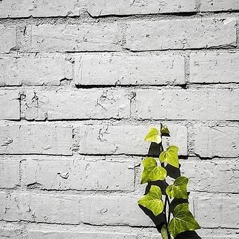 naturaleza En Urbe #hiedra  #ivy by Katalina Fuentes