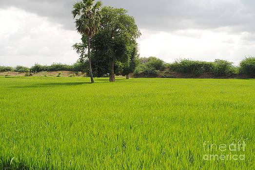 Nature 01 by Sharath Babu S