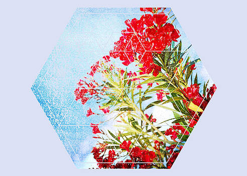 Nature and Geometry - The Red Flowers by Denis Marsili