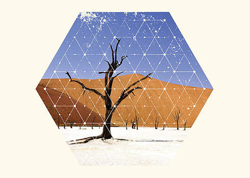 Nature and Geometry - The tree by Denis Marsili