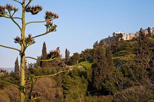 Sentio Photography - Nature Greece Athens 03