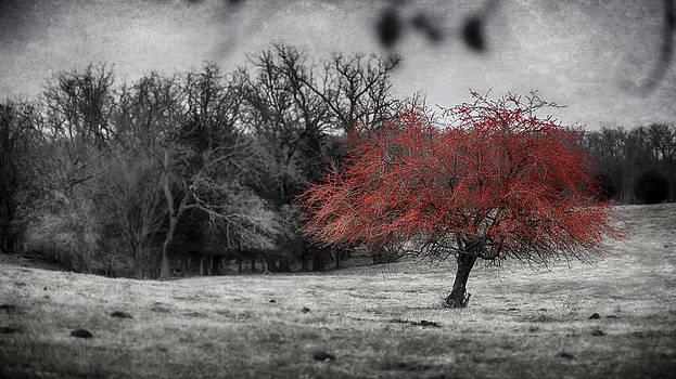 Nature in Red by Garett Gabriel