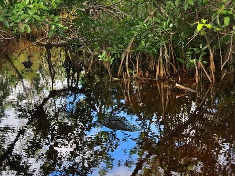 Nature in the Everglades Mangroves by Bill Marder