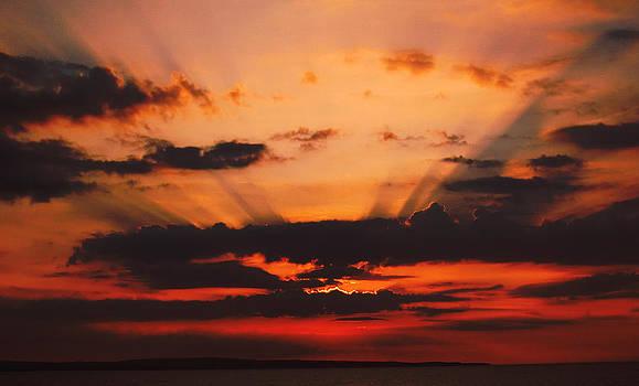 Nature light show by Tony Reddington