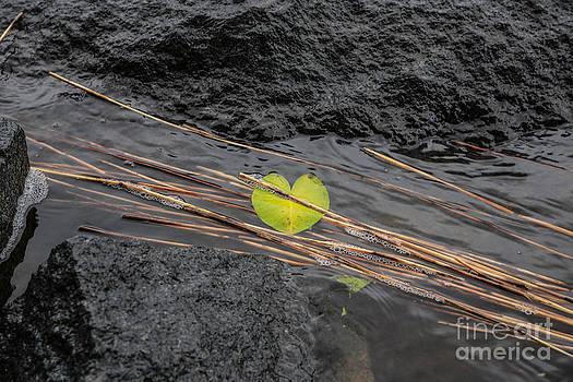 Nature loves you by Markus Hovikoski