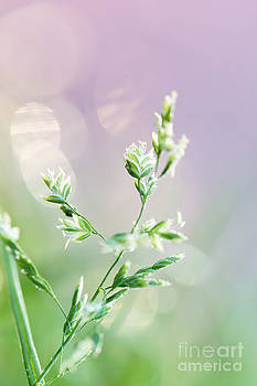 LHJB Photography - Nature pastels