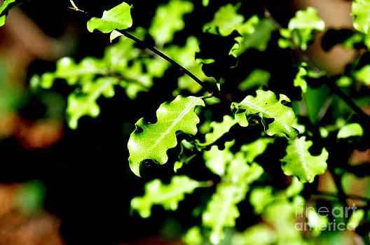 Nature Ruffls by Tanya  Searcy