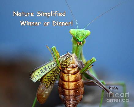 Patrick Witz - Nature Simplified