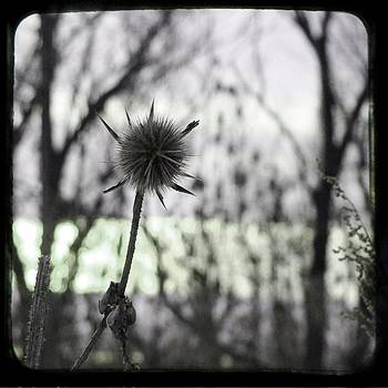Gothicrow Images - Nature Star