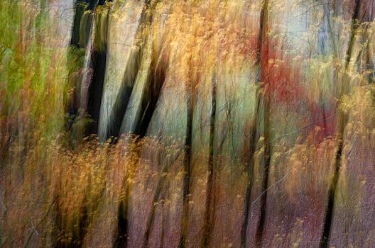 Nature' Tapestry by Jay Krishnan