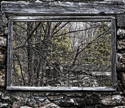 Nature Window by Miss Dawn