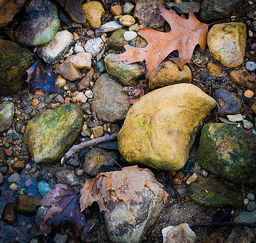 Nature's Abstract 2 by Virginia Folkman