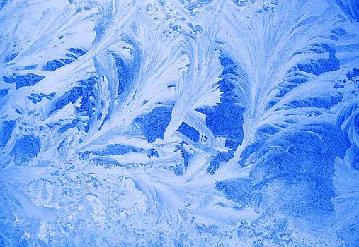 Ramunas Bruzas - Nature