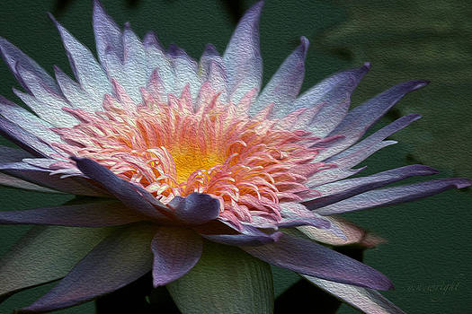 Nature's Baroque by Yvonne Wright