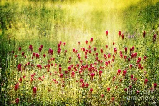 Scott Pellegrin - Nature