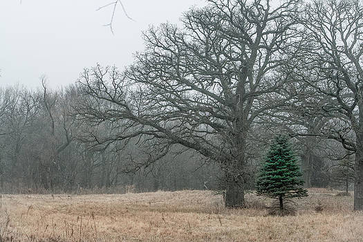 Natures Christmas Tree by Dawn Romine